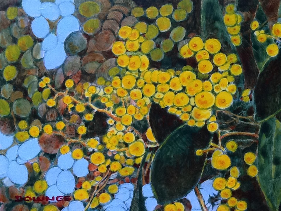 """027 WATTLE"" original fine art by Trevor Downes"