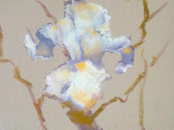"""Still Life Floral Painting, Flower Art White Iris by Colorado Artist Susan Fowler"" original fine art by Susan Fowler"