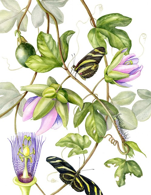 """Botanical Fine Art Painting, Butterfly,Nature PASSIONVINE & ZEBRA SWALLOWTAIL The Art of Nature, F"" original fine art by Mindy Lighthipe"