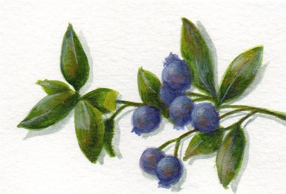 """""""Wild Blueberries 2"""" original fine art by Debbie Shirley"""