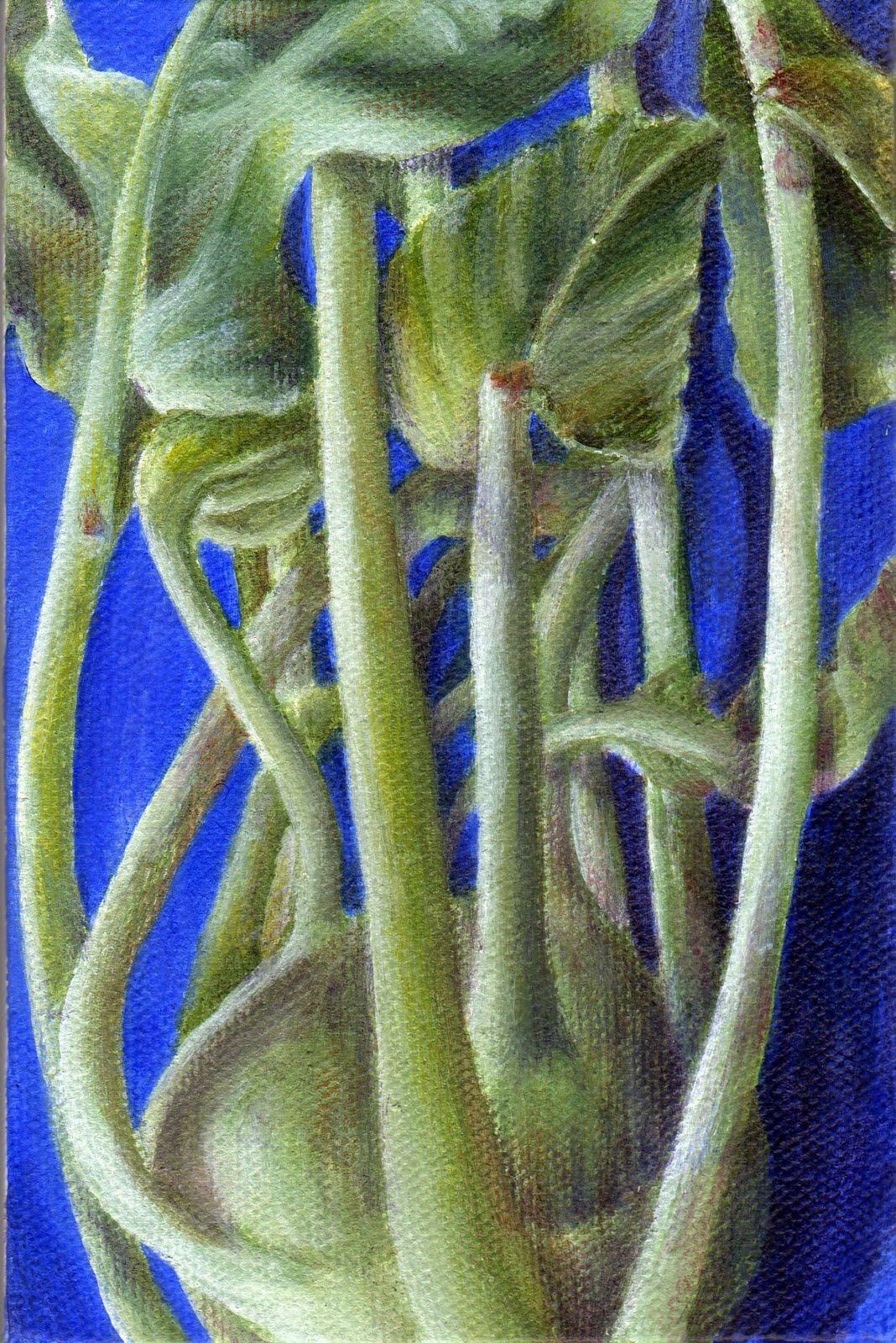 """Kohlrabi"" original fine art by Debbie Shirley"