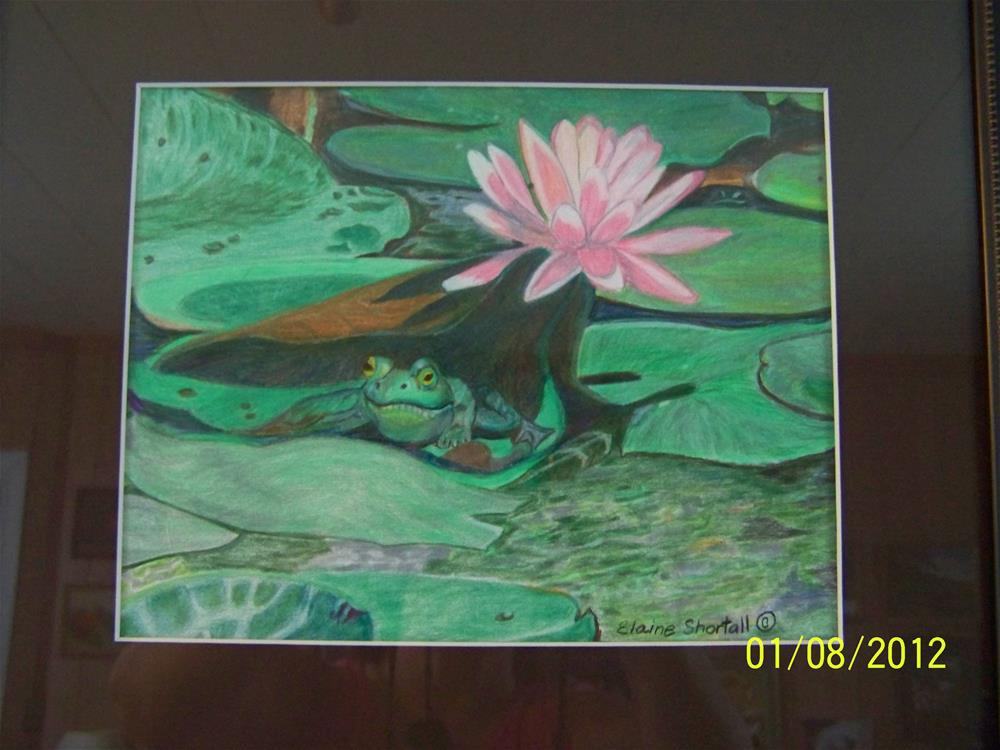 """Find the Peeping Frog"" original fine art by Elaine Shortall"