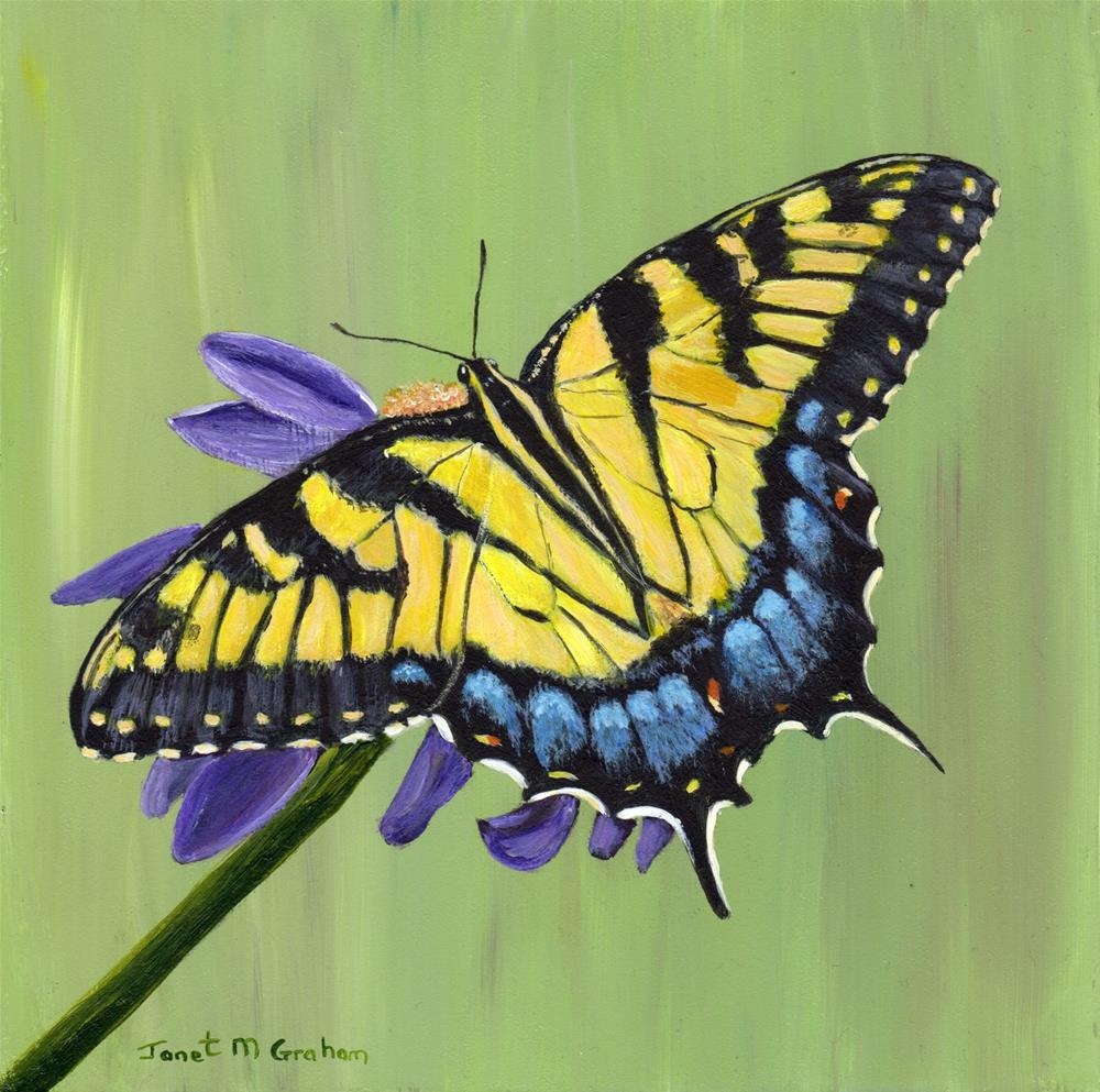 """Tiger Swallowtail"" original fine art by Janet Graham"