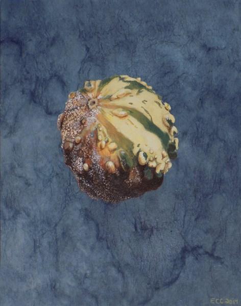 """Gourd"" original fine art by Emily Clanton"