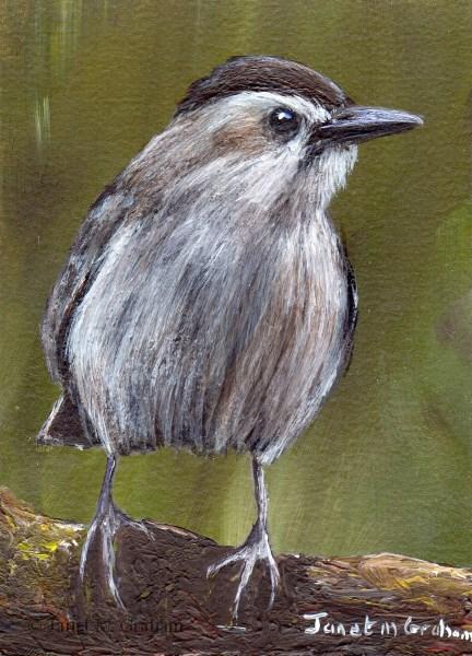 """Gray Catbird ACEO"" original fine art by Janet Graham"