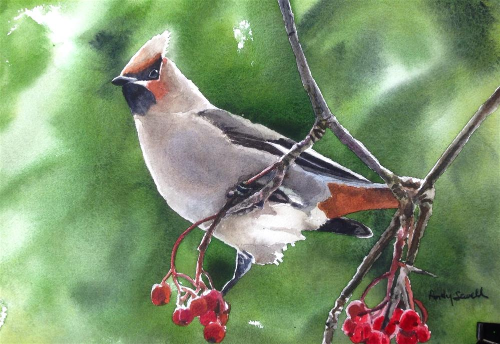 """W is for Waxwing"" original fine art by Andy Sewell"