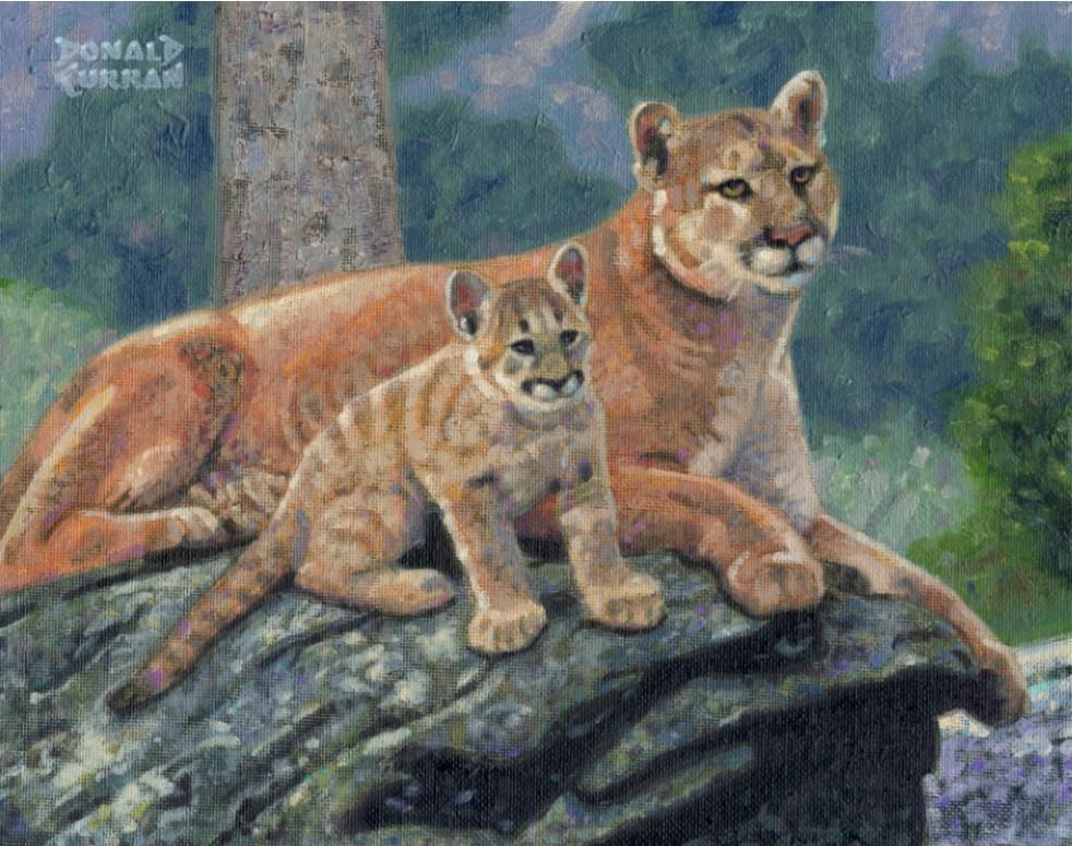 """Mountain Lion"" original fine art by Donald Curran"