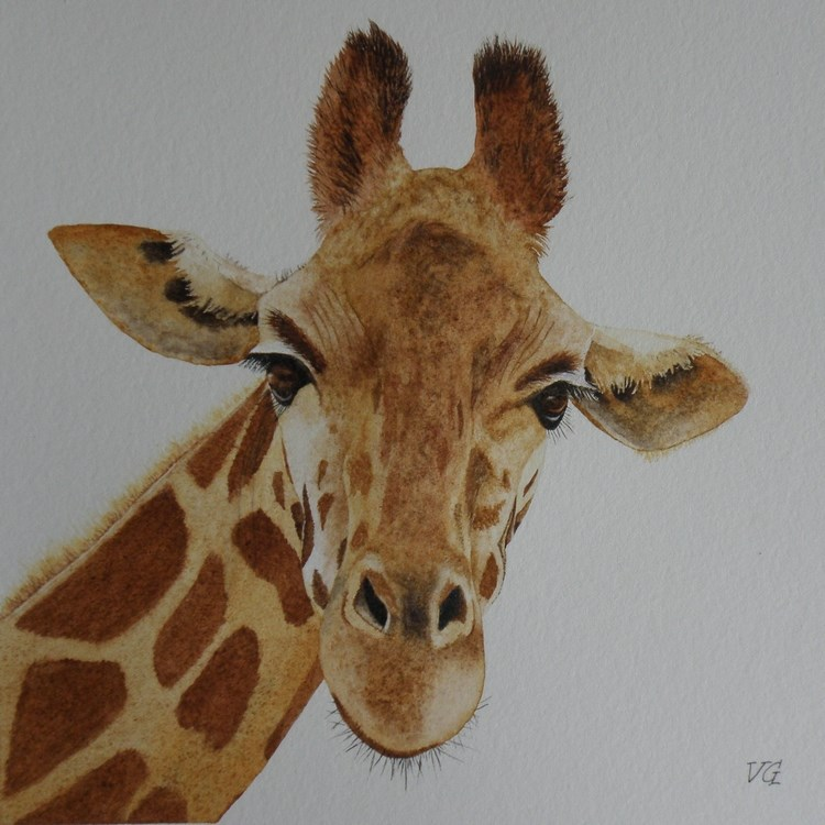 """Giraffe"" original fine art by Vicki Greene"
