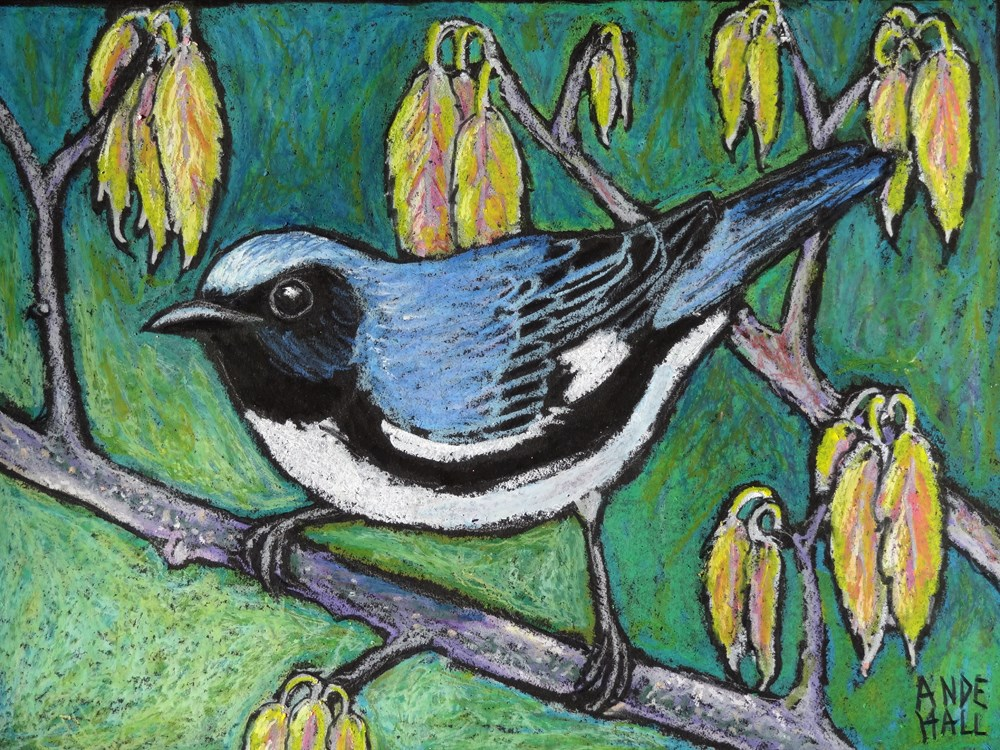 """Black Throated Blue Warbler"" original fine art by Ande Hall"