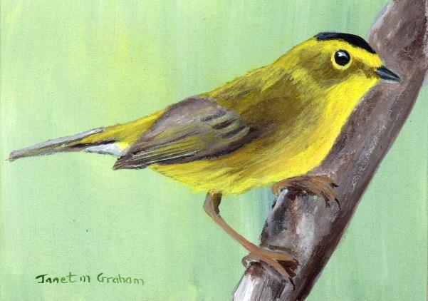 """Wilson's Warbler ACEO"" original fine art by Janet Graham"