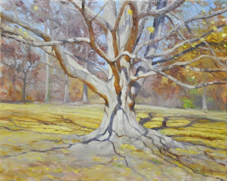 """""""Arboretum Maple"""" original fine art by Scott Harding"""