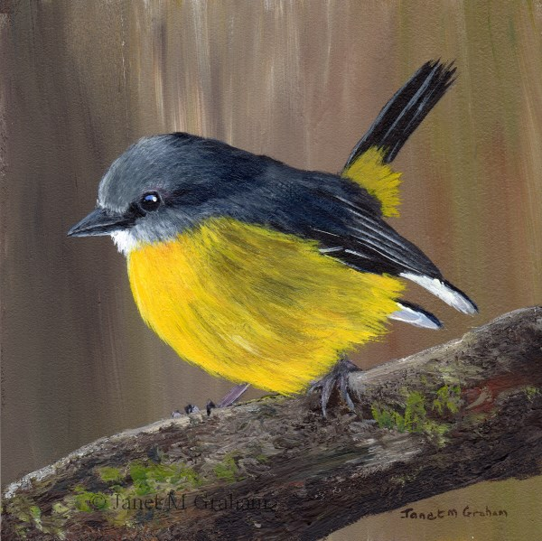"""Eastern Yellow Robin No 2"" original fine art by Janet Graham"