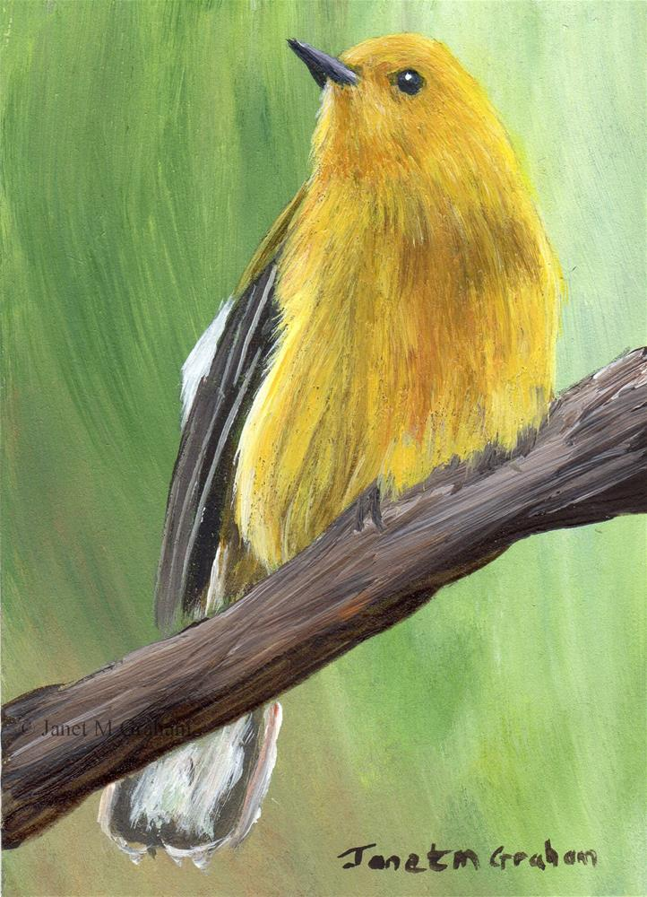 """Prothonotary Warbler ACEO"" original fine art by Janet Graham"