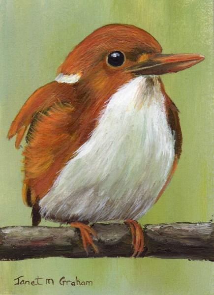 """Madagascar Pygmy Kingfisher ACEO"" original fine art by Janet Graham"