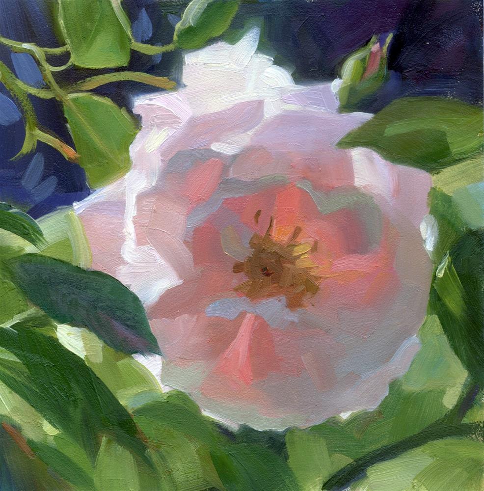 """""""Pink rose"""" original fine art by Kathy Weber"""