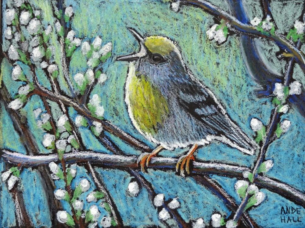 """Brewster's Warbler"" original fine art by Ande Hall"