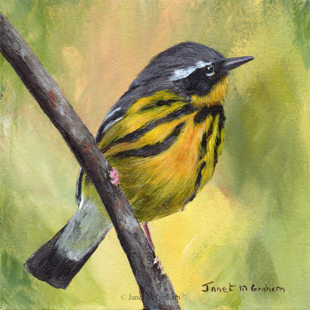 """Magnolia Warbler No 2"" original fine art by Janet Graham"