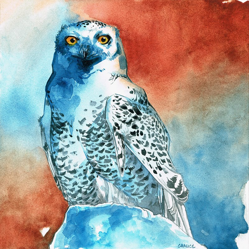 """Snowy Owl"" original fine art by Annabel Chance"