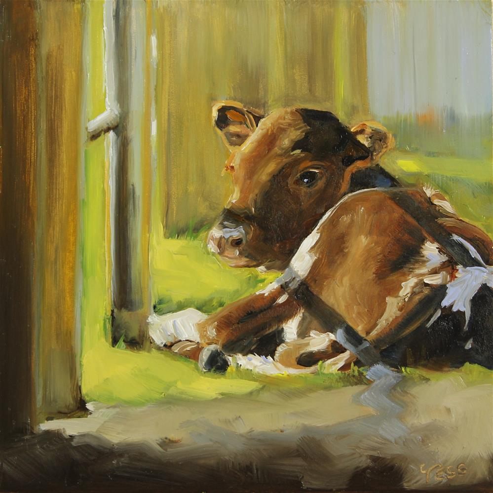 """Day 12- Calf Enjoying The Sunshine"" original fine art by Tess Lehman"