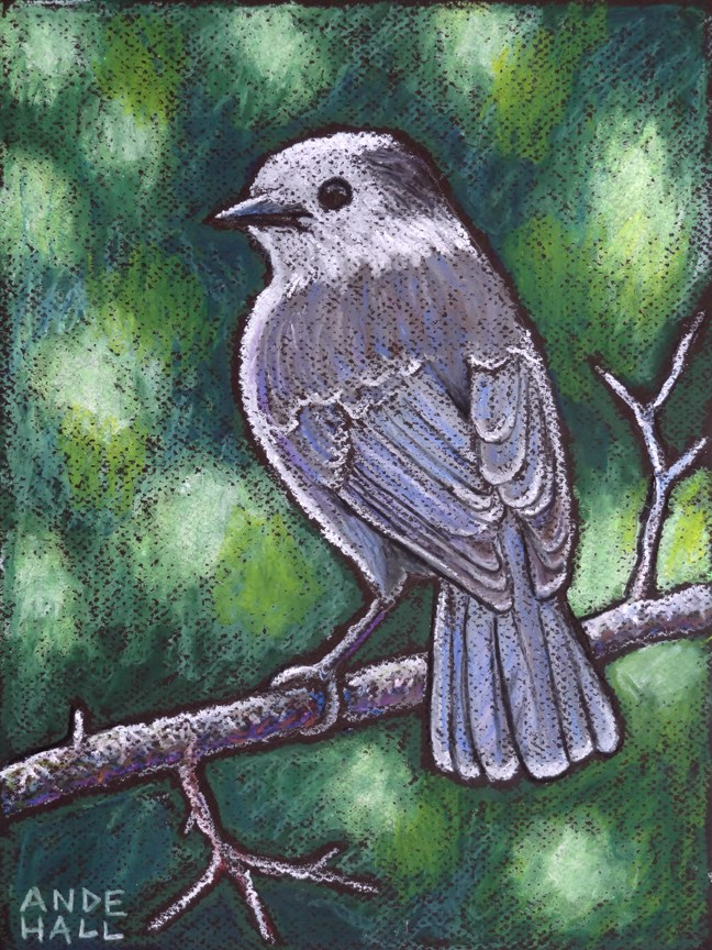"""Gray Jay"" original fine art by Ande Hall"