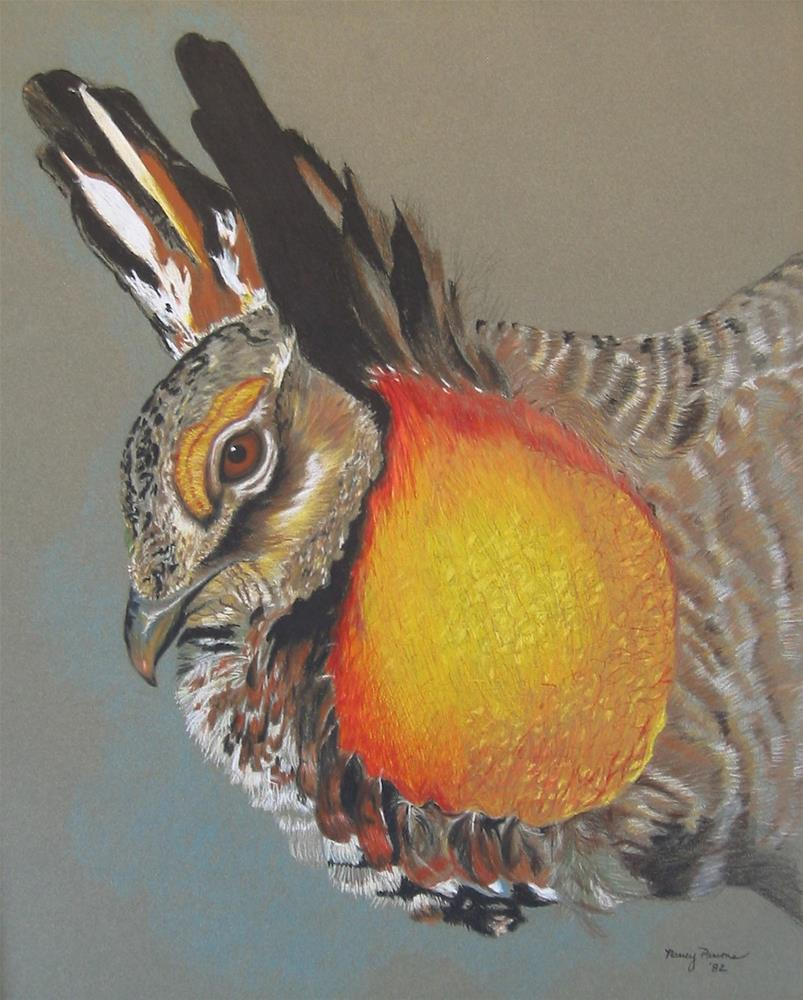 """Prairie Chicken"" original fine art by Nancy Parsons"