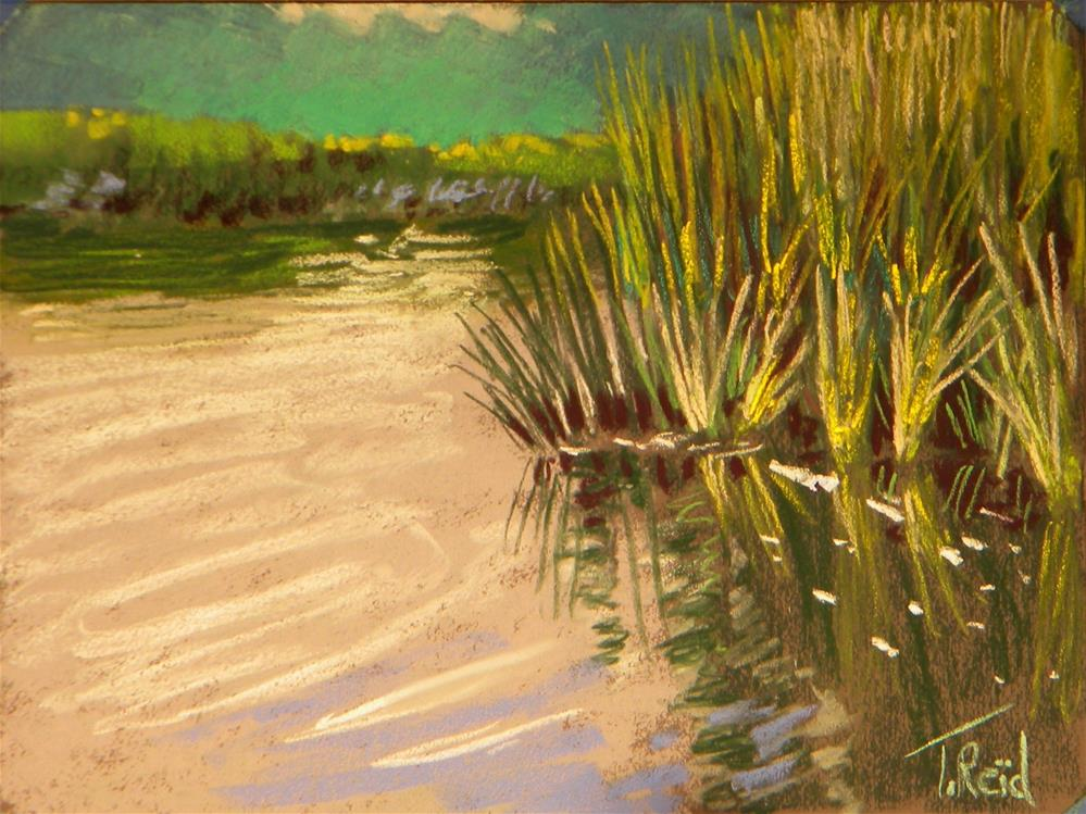 """Water reeds"" original fine art by Toby Reid"