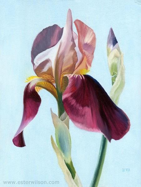 """""""Summer Iris"""" original fine art by Ester Wilson"""