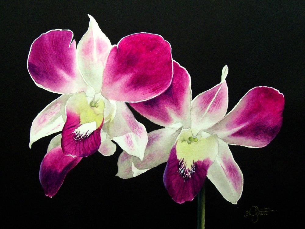 """Pink Orchids"" original fine art by Jacqueline Gnott, TWSA, WHS"