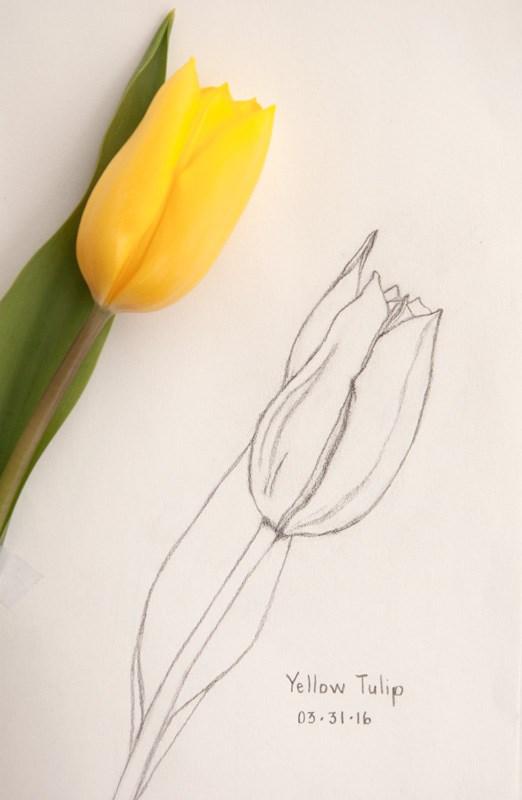 """Daily Sketch: Yellow Tulip"" original fine art by Debbie Lamey-Macdonald"