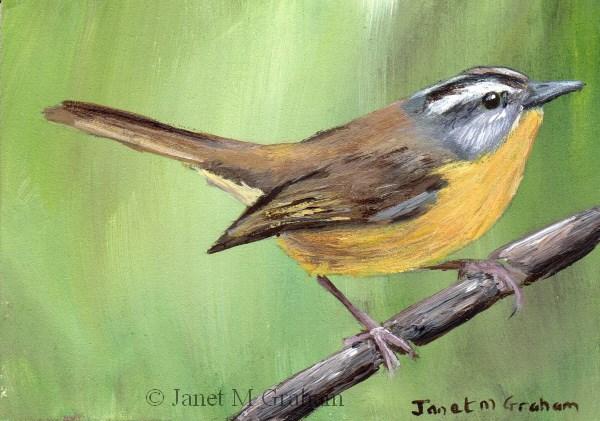 """""""Golden Crowned Warbler ACEO"""" original fine art by Janet Graham"""
