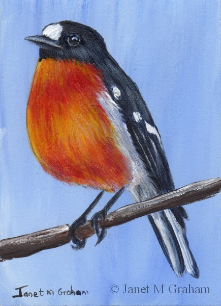 """Flame Robin ACEO"" original fine art by Janet Graham"