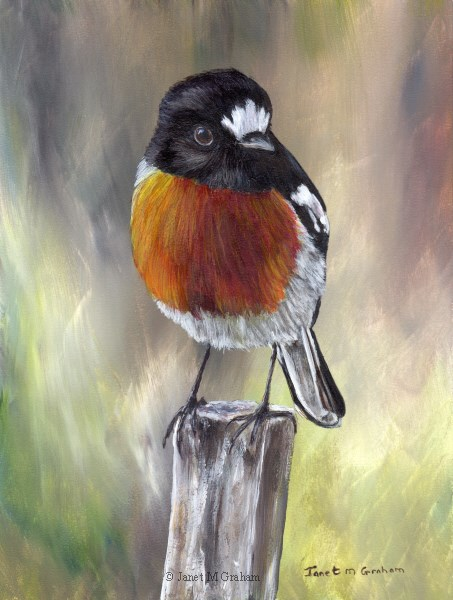 """Scarlet Robin No 3"" original fine art by Janet Graham"