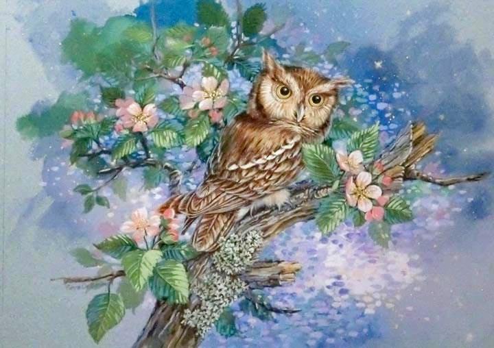 """""""Saw Whet Owl"""" original fine art by Jean Pierre DeBernay"""