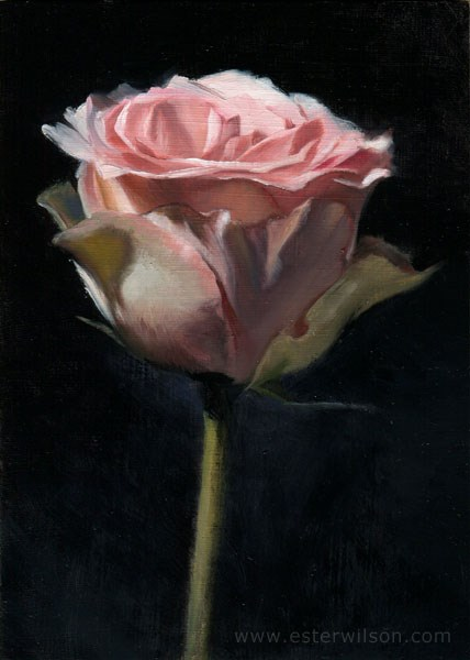 """Pink Rose"" original fine art by Ester Wilson"