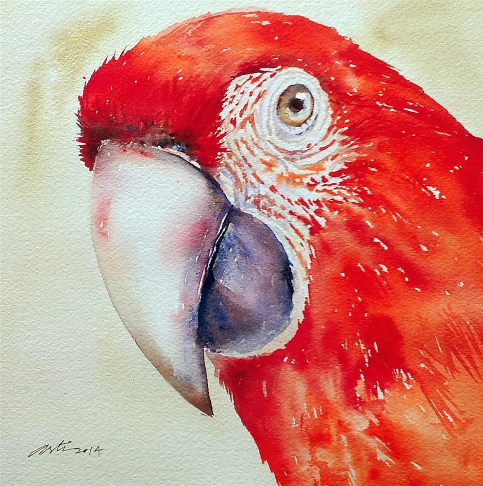 """Scarlet Macaw"" original fine art by Arti Chauhan"