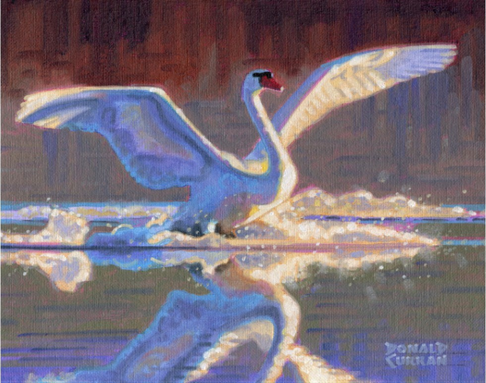 """Swan 3"" original fine art by Donald Curran"