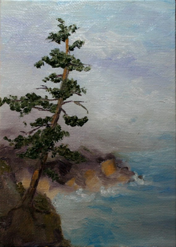 """Coastal Pine"" original fine art by Jean Nelson"