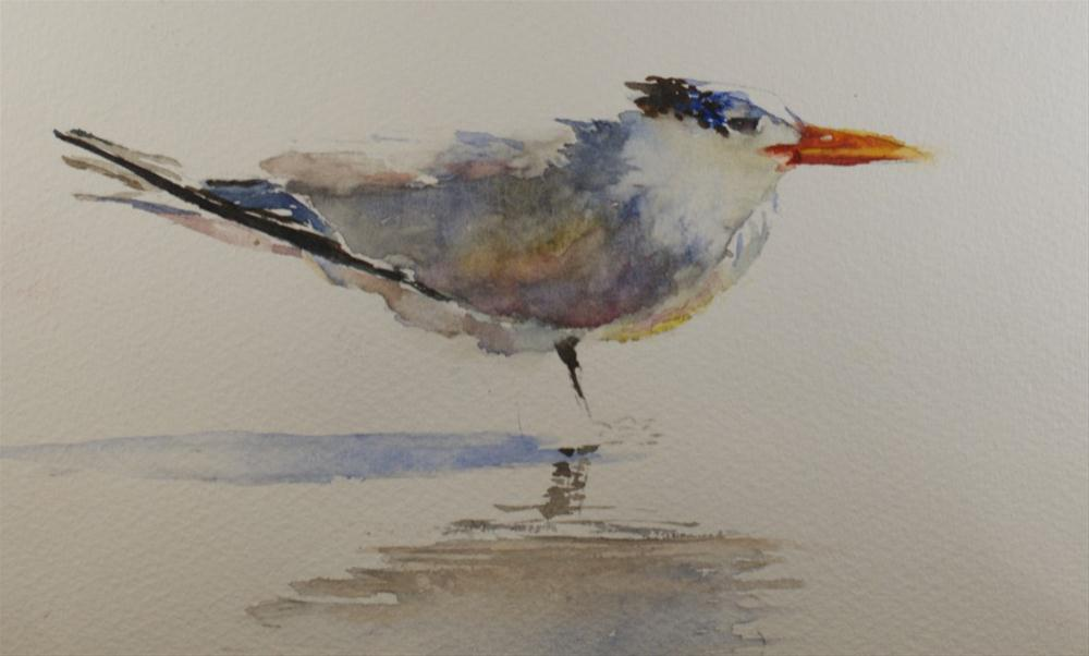 """Hh Royal Tern"" original fine art by Sue Churchgrant"