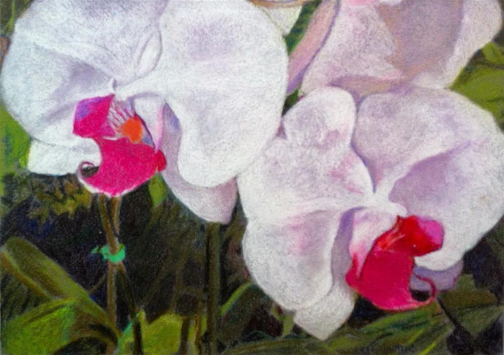 """""""Wild Orchid Not"""" original fine art by Libby Gilpatric"""