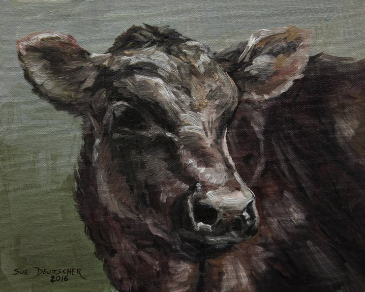"""Black Angus Calf"" original fine art by Sue Deutscher"