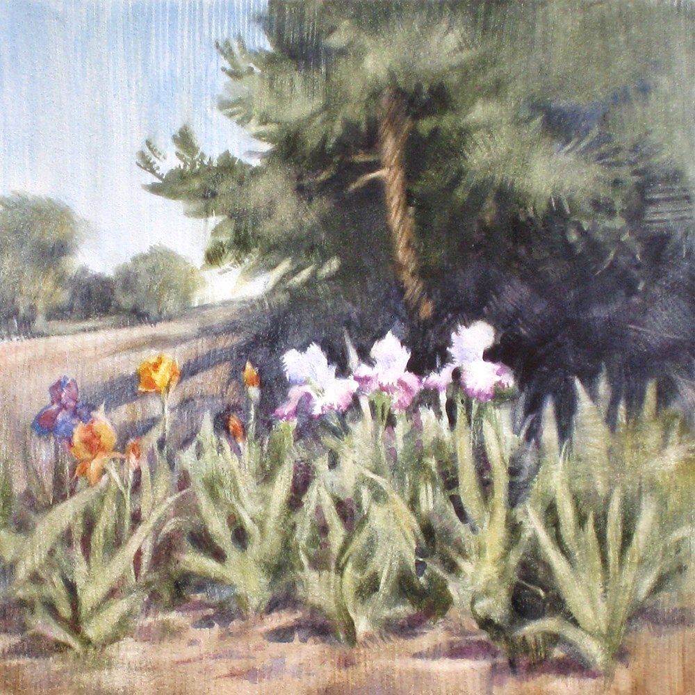 """Irises at Jurupa Cultural Center"" original fine art by Ginger Pena"