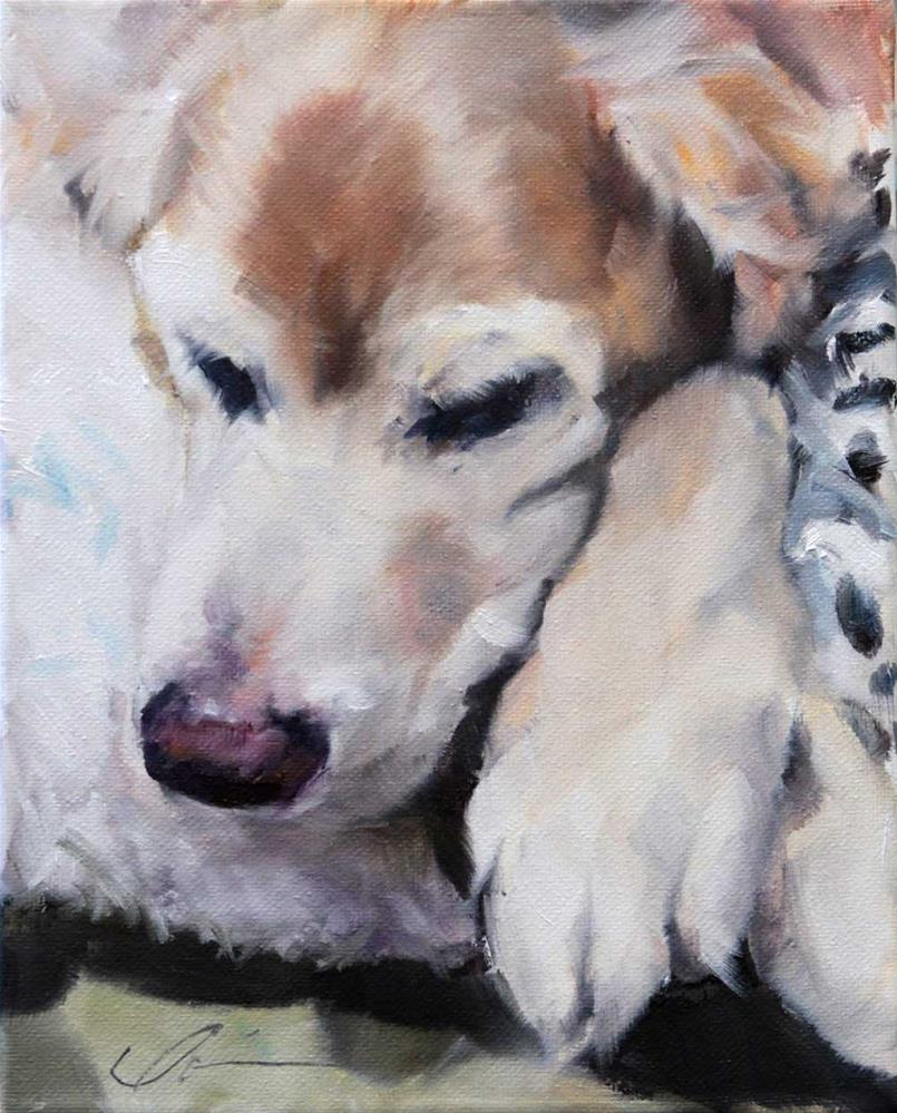 """The Daily Dog - Six"" original fine art by Clair Hartmann"