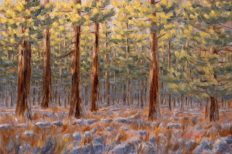 """C1593 Winter Dawn amongst the Ponderosas (near Hole-in-the-Ground, Oregon High Desert)"" original fine art by Steven Thor Johanneson"