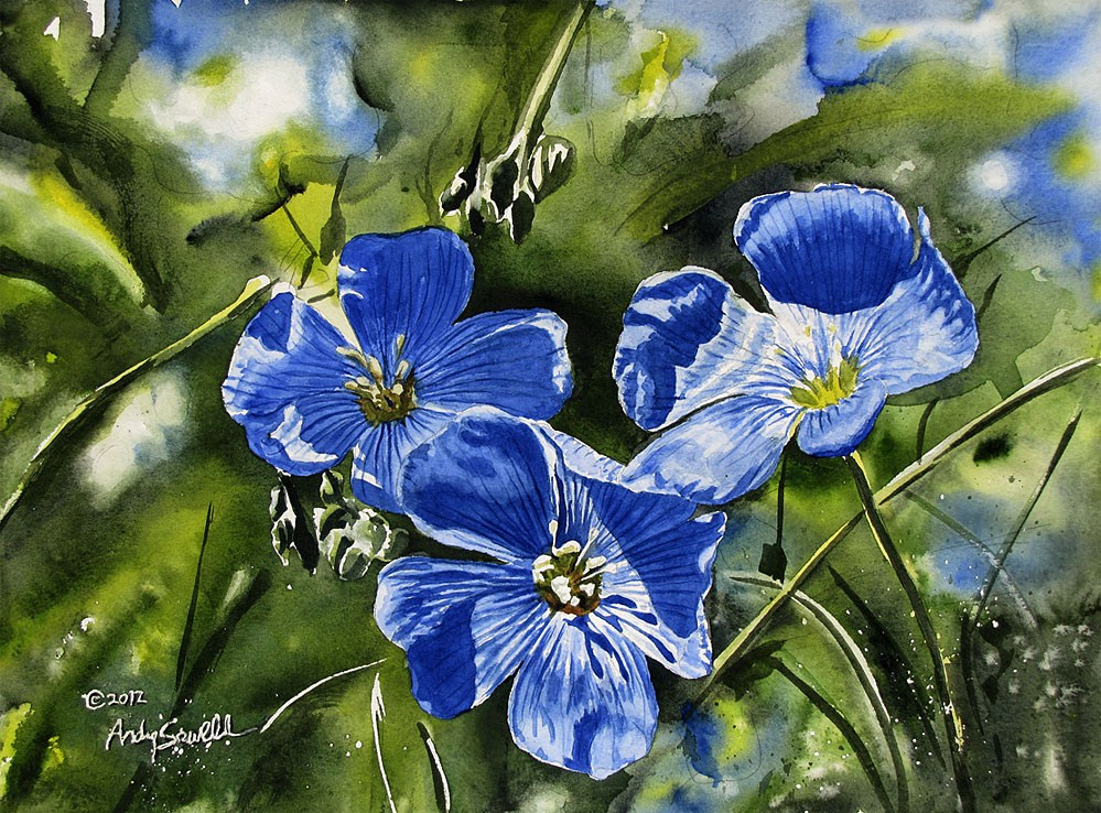 """Blue Flax"" original fine art by Andy Sewell"