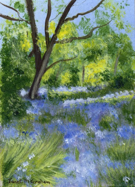 """Bluebells ACEO"" original fine art by Janet Graham"
