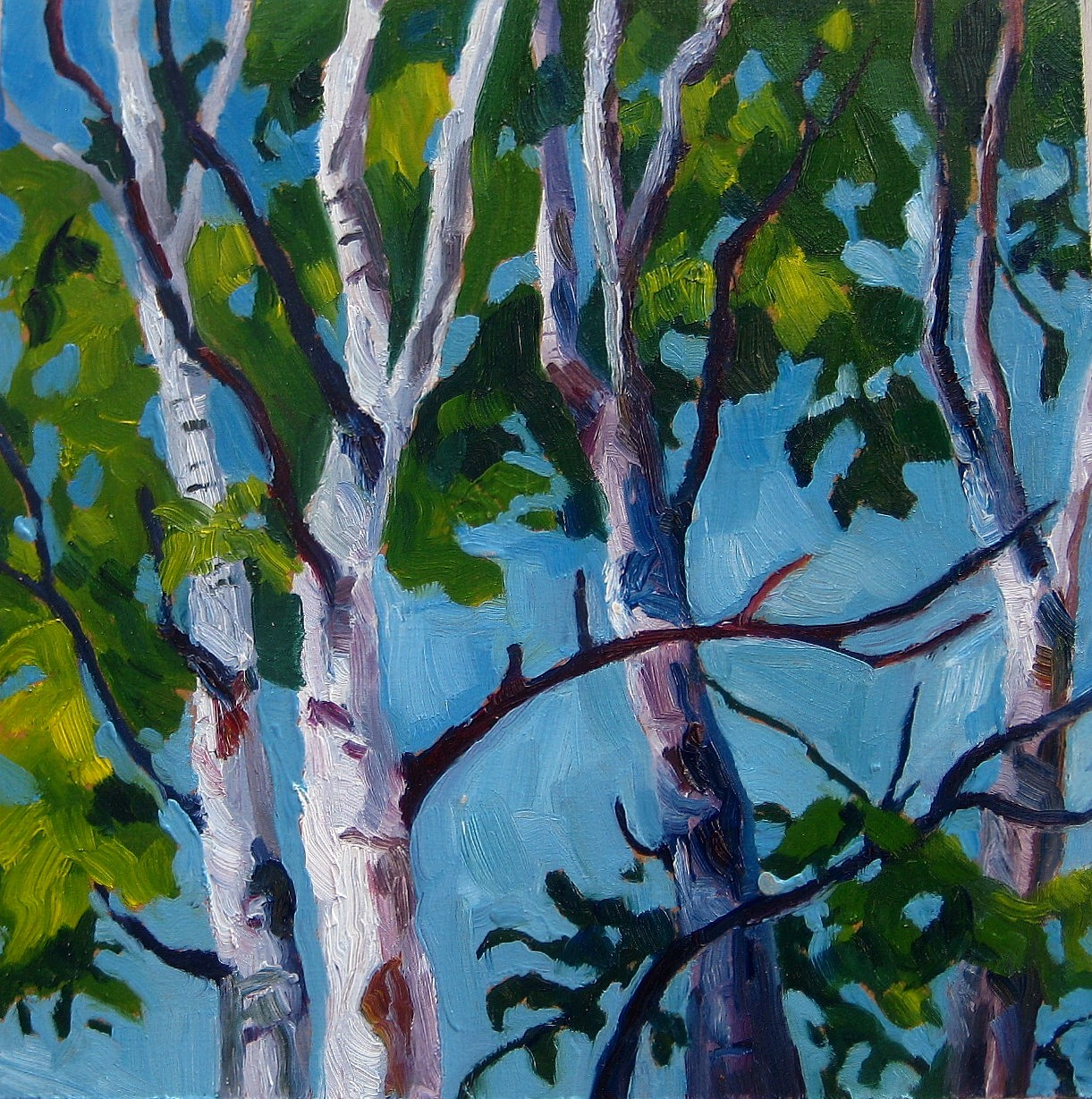 """Kenderdine Birches"" original fine art by Nicki Ault"
