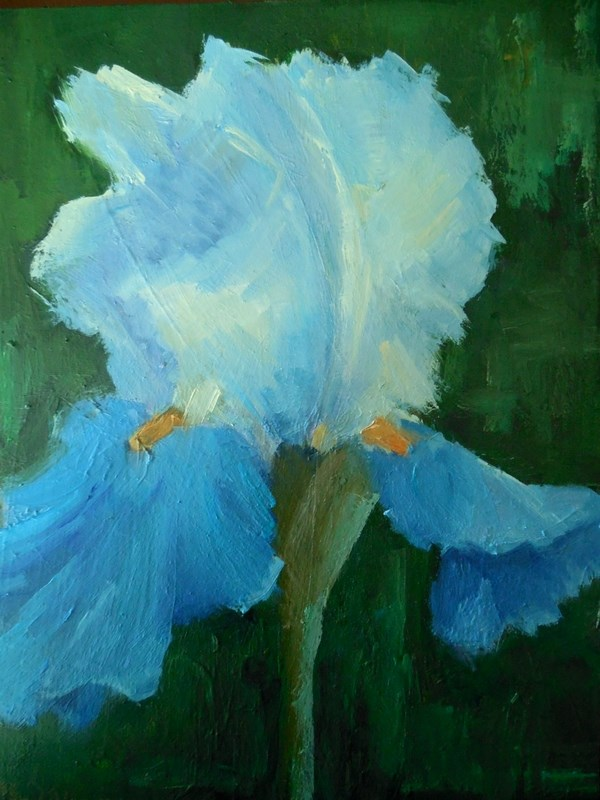 """Flower Painting, Iris Painting, Daily Painting, Small Oil Painting, 6x8 on Canvas Panel"" original fine art by Carol Schiff"