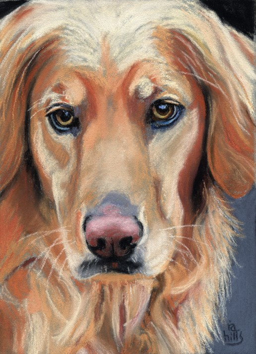 """commissioned golden retriever SOLD"" original fine art by Ria Hills"