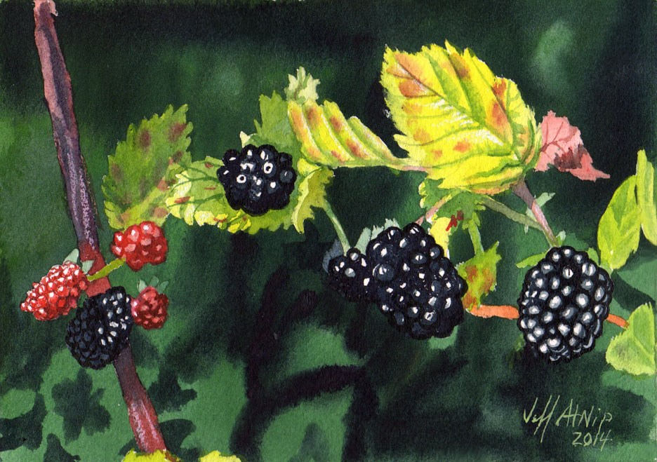 """Wild Blackberries"" original fine art by Jeff Atnip"