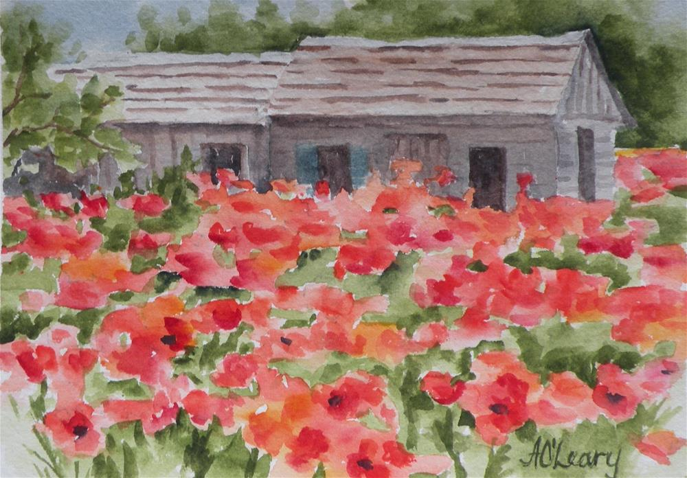 """Castroville Poppies"" original fine art by Alice O'Leary"